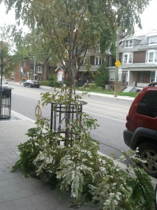 Young tree damaged on Roncesvalles.