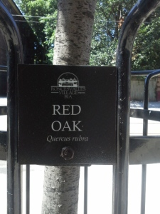Red Oak tree label