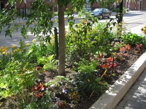 Roncy garden @ 225 Roncesvalles in late June 2014