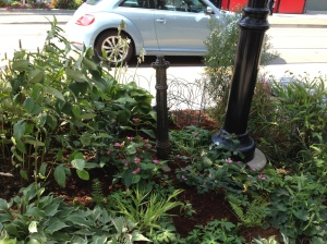 Plant bed on Roncesvalles Avenue with water hydrant
